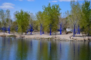 The Blue Trees at Tingley Beach