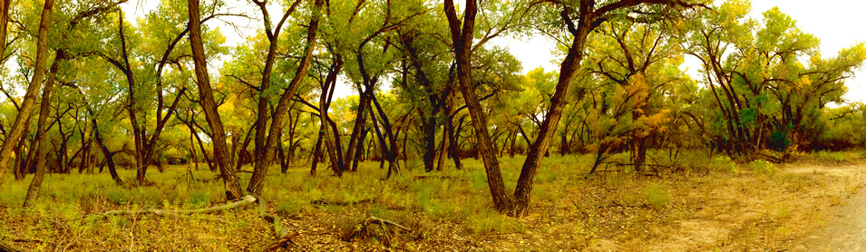 Rio Grande Nature Center, Bosque Albuquerque