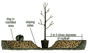 Containerized Tree Planting